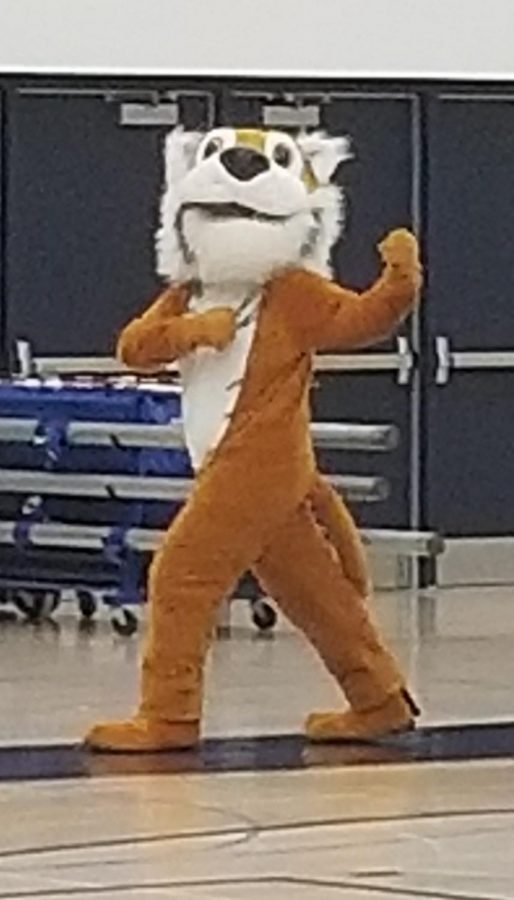 Junior Spencer Kratz pumps up the crowd wearing the mascot uniform during the Homecoming assembly in the gym on Sept. 28.